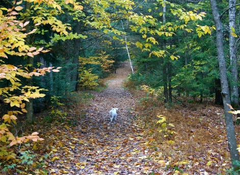 teddy in the fall woods