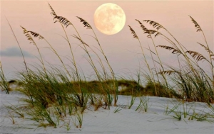 moonbeach