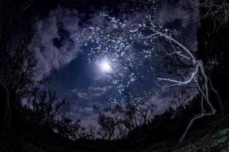 moon-jupiter-Masaaki-Shibuya-3-2-2015-e1425328808277