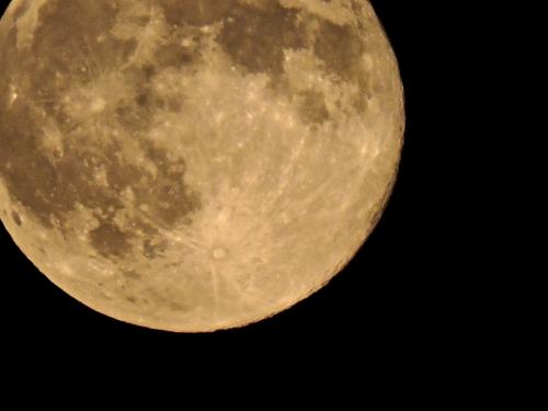 Ginger's full Moon