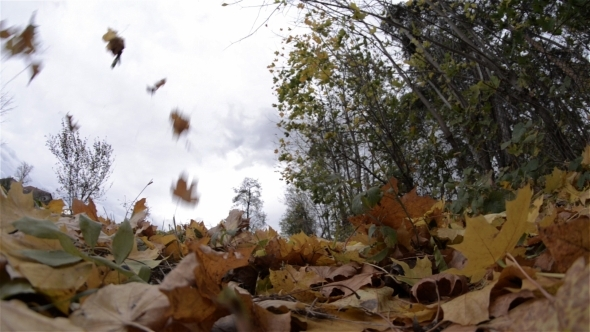 Wind in the leaves of trees 3