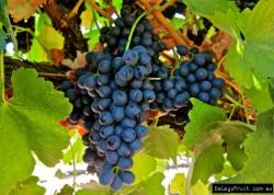 Grape-s