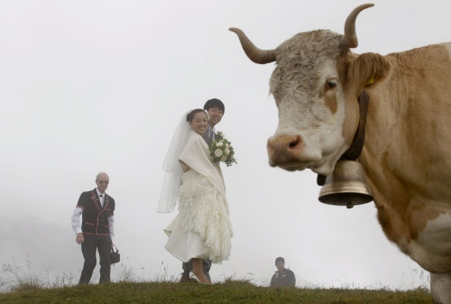 Japanese bridal couple Arisa Chi (2L) and her new husband Kenji Yoshida standing behind a cow after their wedding ceremony on the foggy Mount First (2168m/7113ft) in the Swiss Alpine resort of Grindelwald August 6, 2010. In Grindelwald, the small town below the gray crag of the Eiger North Face, shop signs bear Kanji characters, the train station's main platform is bustling with Japanese tourists, and a chalet is even called Nagano, the same name as the mountainous region of Japan that hosted the Winter Olympics in 1998. Japanese are among the most numerous overseas tourists in Switzerland, and their presence has given rise to businesses catering to their tastes -- including weddings. Picture taken August 6. To match Reuters Life! SWISS-JAPAN/TOURISM REUTERS/Arnd Wiegmann (SWITZERLAND - Tags: ENVIRONMENT SOCIETY TRAVEL) - RTR2H6CY
