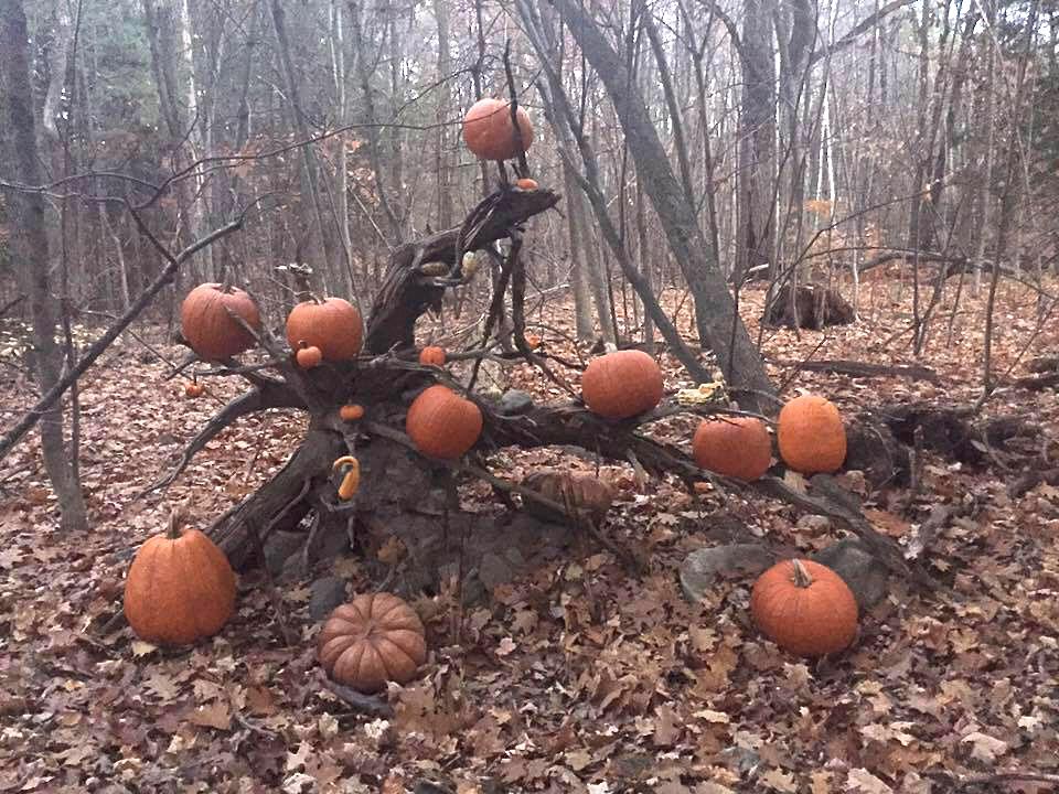 Alec's Pumpkins