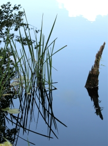 reeds at mainstone