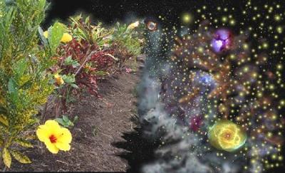 reflected_garden450