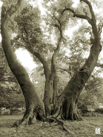 heart-shaped-trees