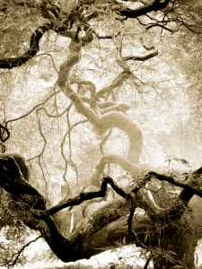 twisty-tree-sepia