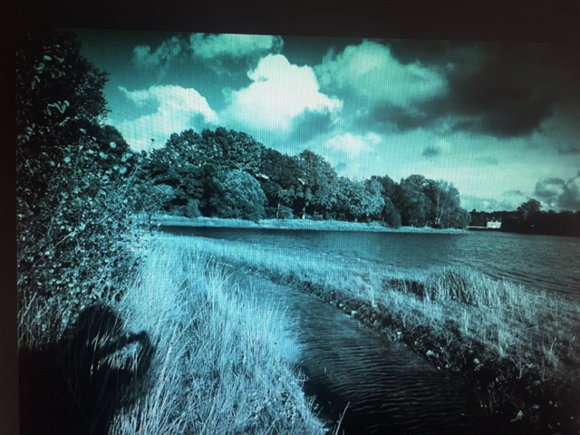 reeds-and-camera