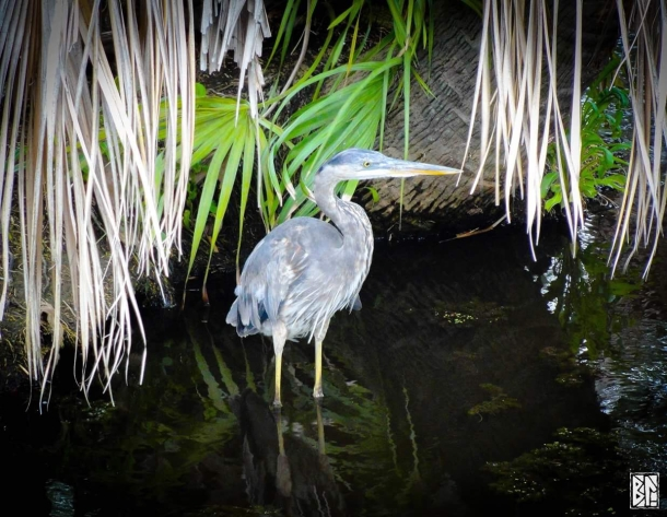 Glowing heron BL