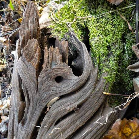 knotted wood and moss