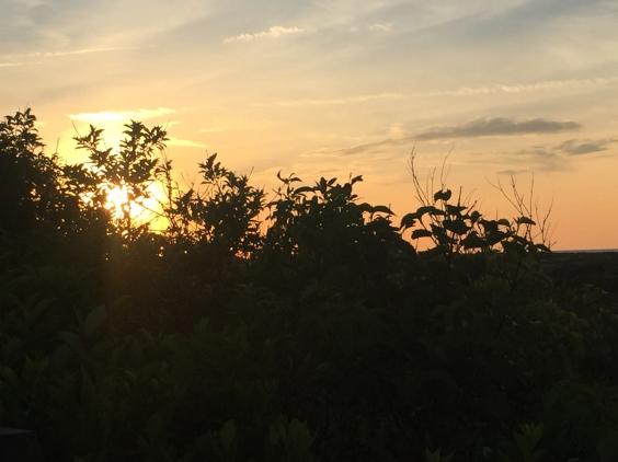 Sunset on Provincetown dunes