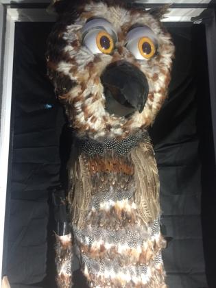 Owl at Halloween