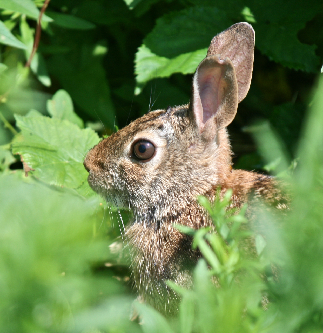 rabbit in the leaves