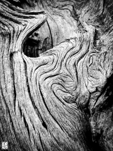 swirling wood BL