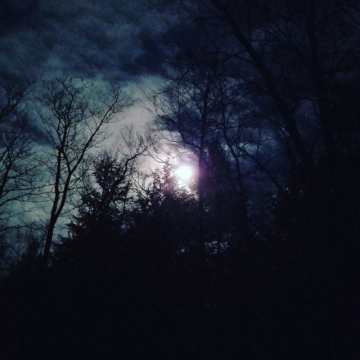 Scorpio Moon in trees