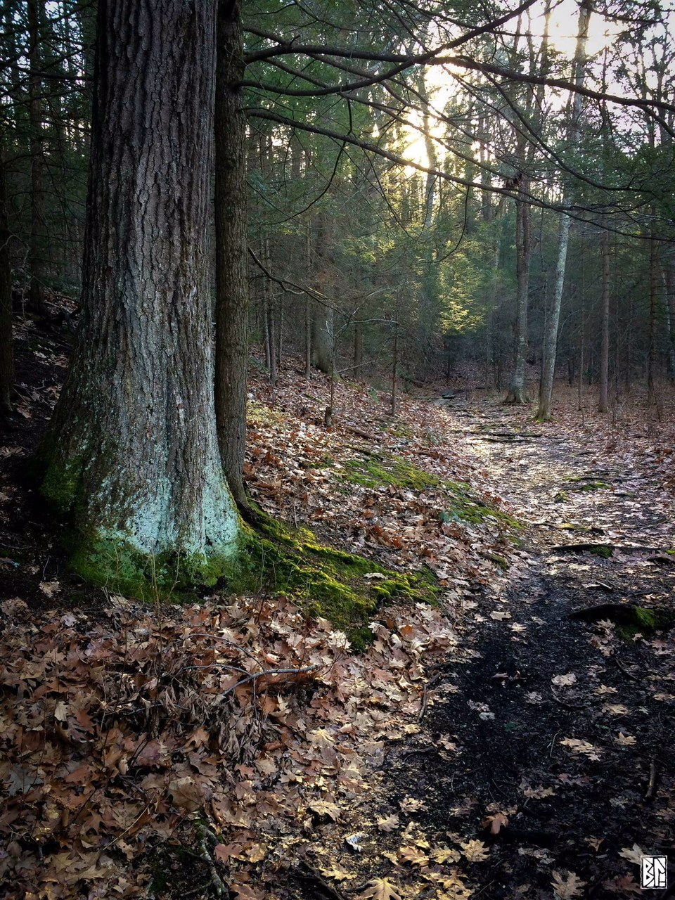 forest path BL