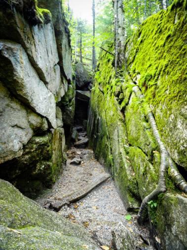 mossy chasm