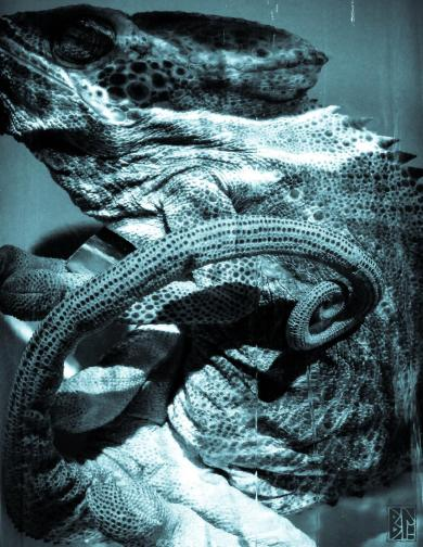 sea snakes BL