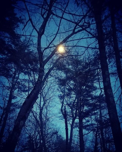 Aaaron moon in bare branches