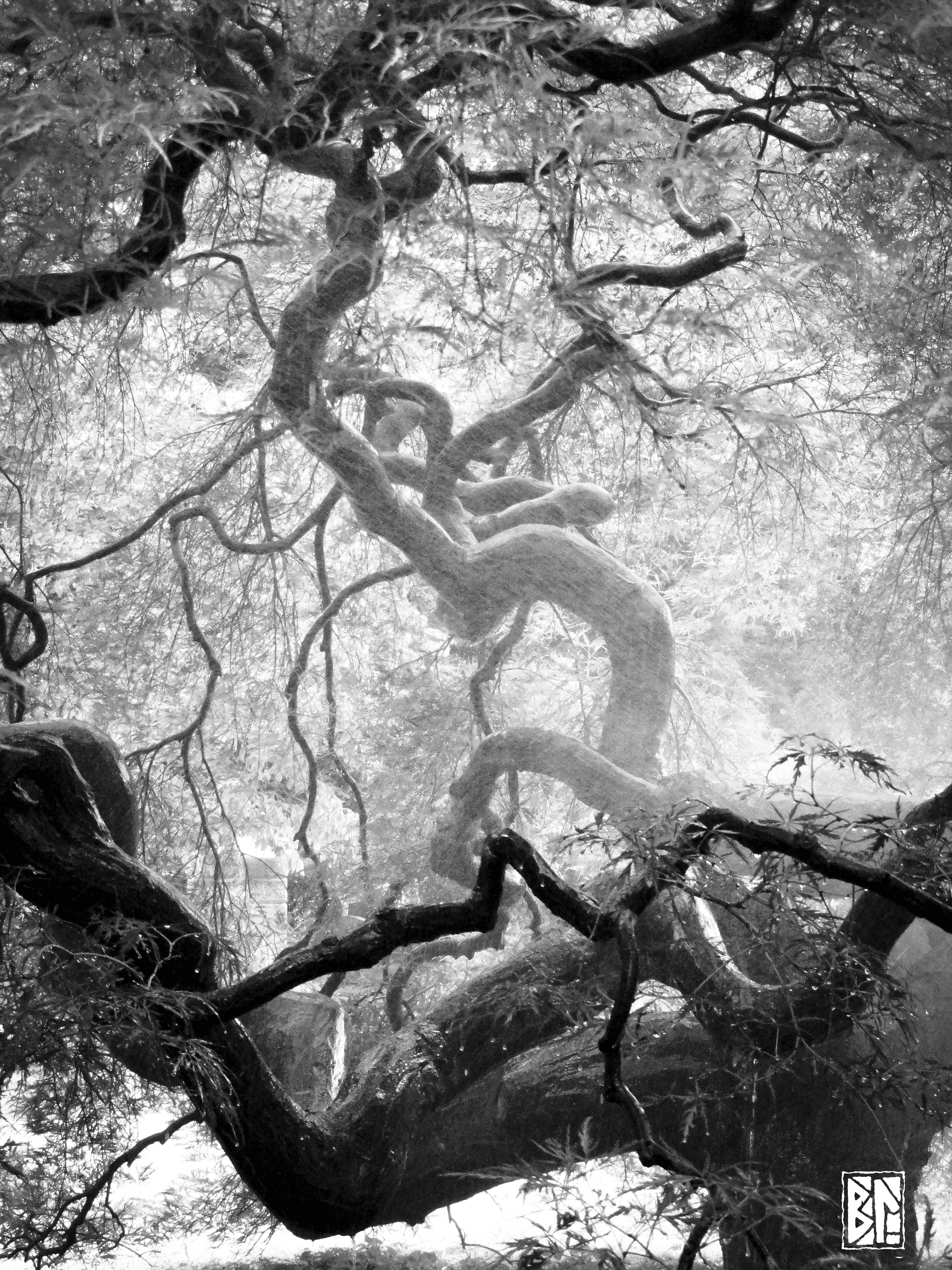 Twisty tree b&W BL