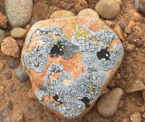 desert stone face