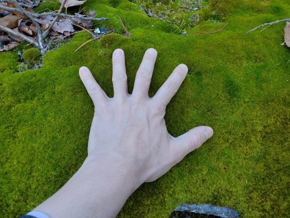 3-21-20 hand on moss.jpg