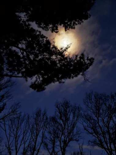 cloudy moon through branches