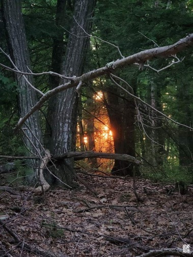 Sunset through gate of trees BL