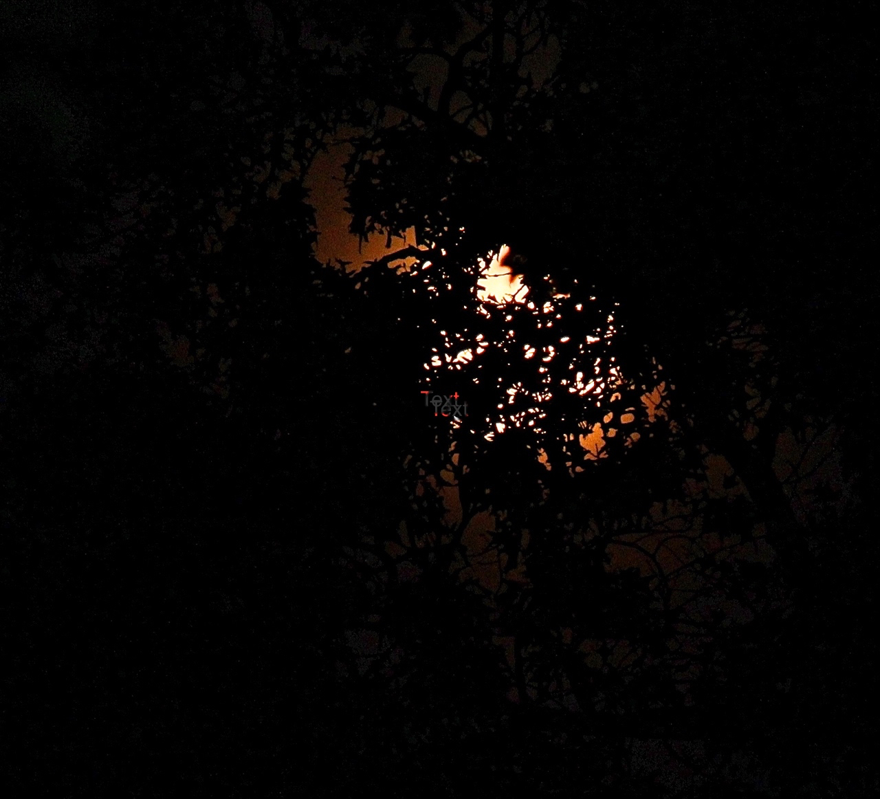 Full Moon in branches