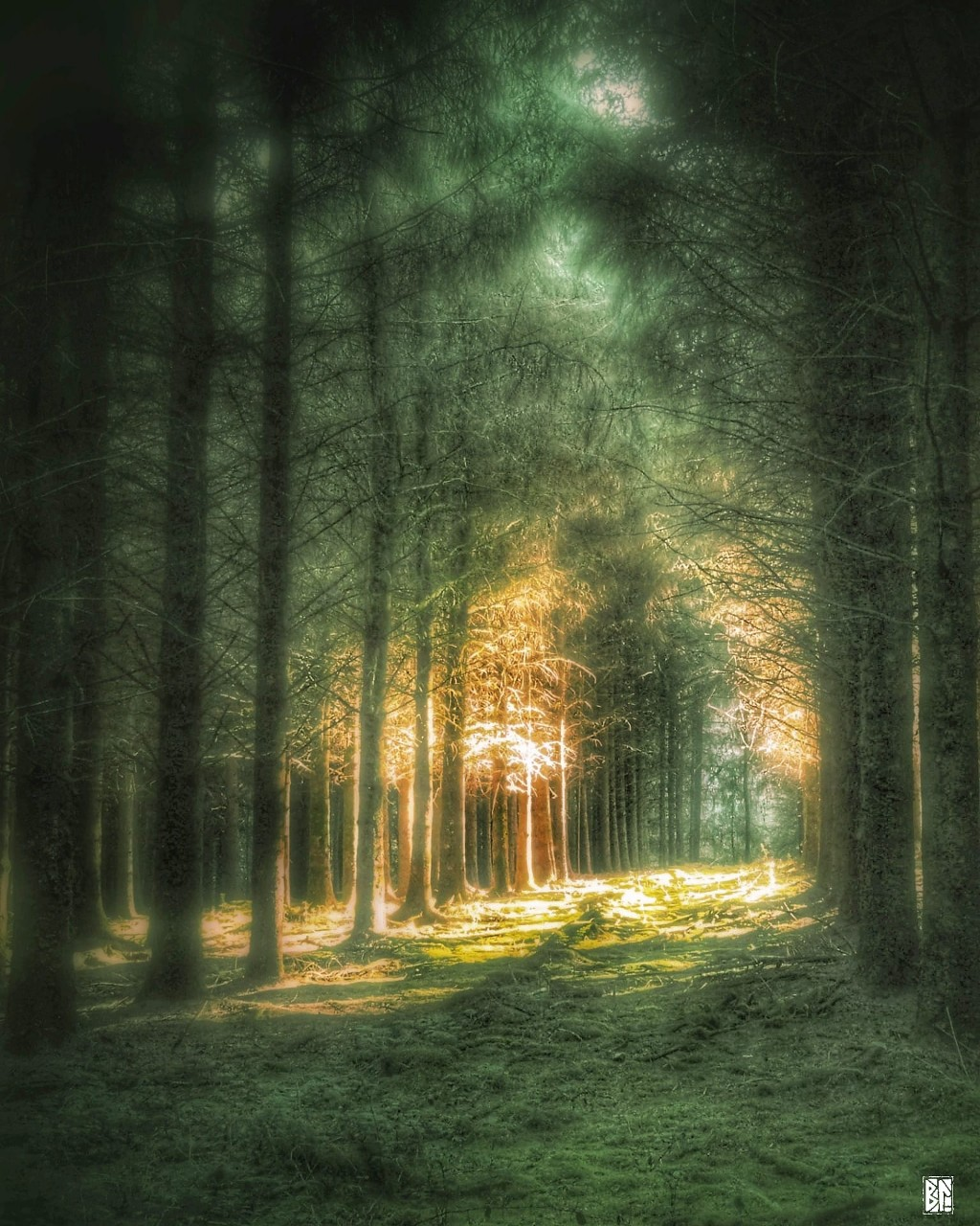 path through the light in the woods BL