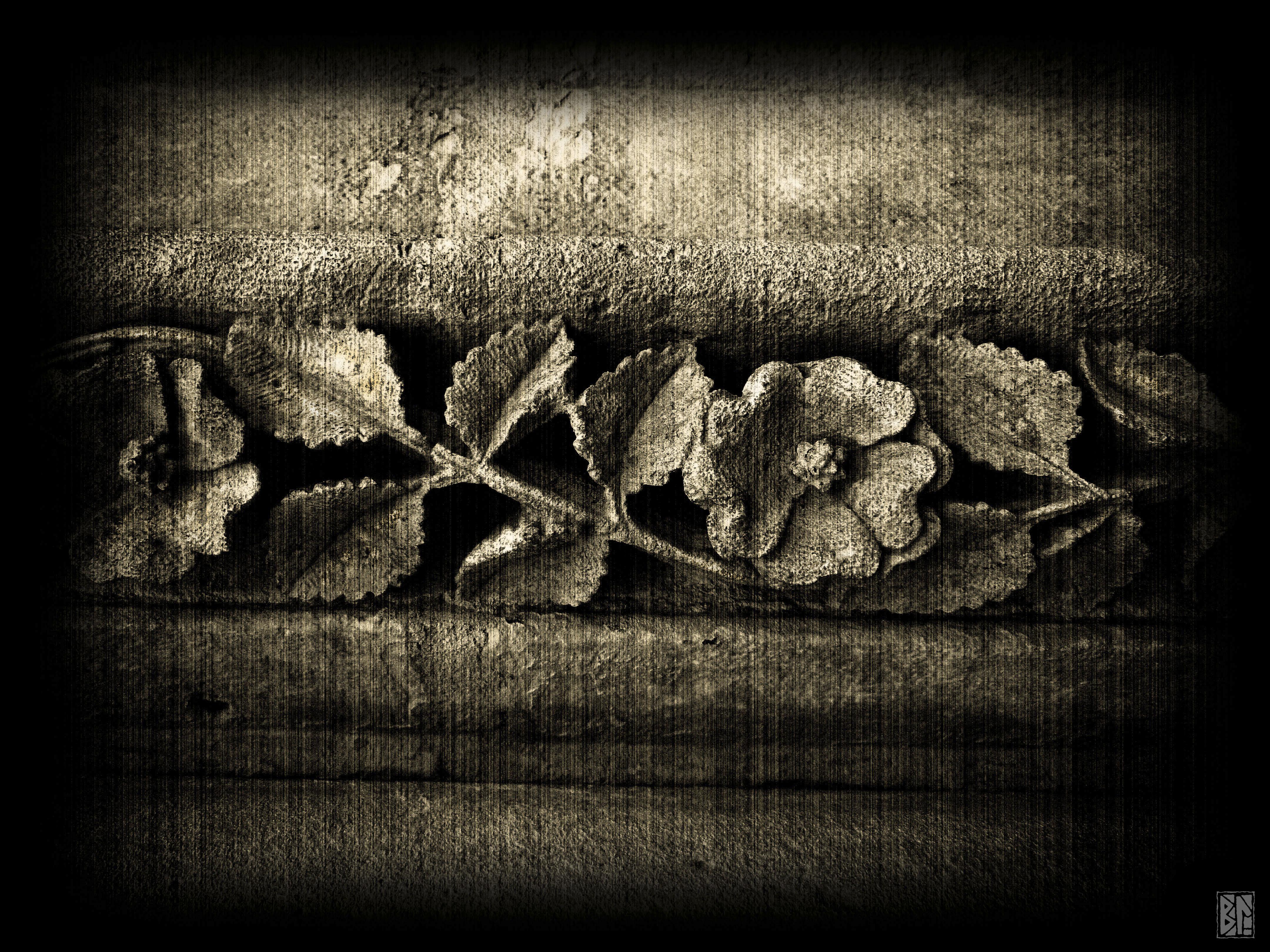 Rosa Medievalis BL